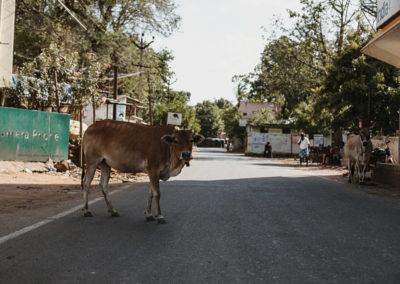 PATRIZIA Child Care Porayar, Indien - Umgebung, Kuh auf der Straße